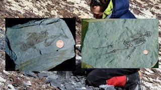 Download 600 million year old fossils of tiny humanoids found in Antarctica Video