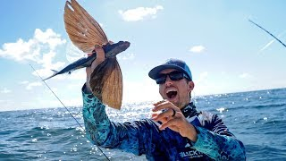 Download Catching Fish that can Fly!! Video