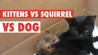 Download Squirrel Adopted By Cat Family Video
