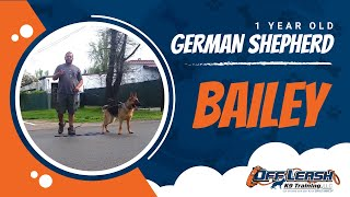 Download German Shepherd with Aggression Issues - German Shepherd Dog Trainers Video