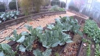 Download Can You Eat Broccoli Leaves? Yes - They are Awesome! Video