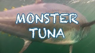 Download MONSTER TUNA - 1000 pound Giant Bluefin caught in record time in PEI - Cool Underwater Shots Video