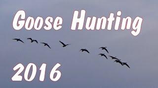 Download Early Season Goose Hunting Pennsylvania 2016 Video