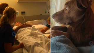Download The Moment This Dog Said A Final Goodbye To Her Owner Is Absolutely Heartbreaking Video