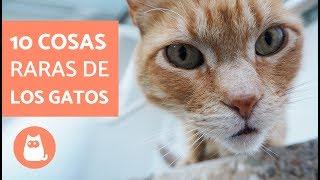 Download 10 COSAS RARAS que hacen los GATOS Video