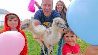 Download The Blonde Emu GENDER REVEAL Video