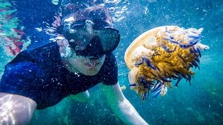 Download SWIMMING WITH HUNDREDS OF JELLYFISH Video