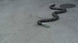 Download Cool Robot Snake Video