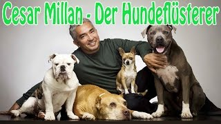 Download Cesar Millan - der Hundeflüsterer Video
