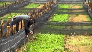 Download Snail farming European Commission english version Video