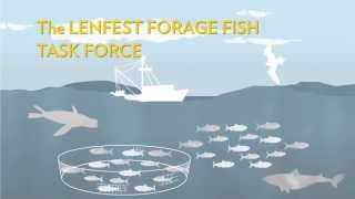 Download Fisheries Management: It's Better with Predators   Pew Video