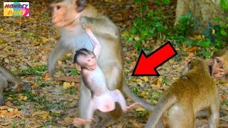 Download May Day! Bad young monkey catch Justino baby|So sadly Justino cry loudly want back|Monkey Daily 498 Video