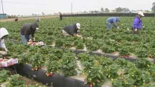 Download Climate Change and Agriculture: America's Heartland Video