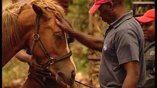 Download ENOS MAFOKATE - the life & dedication of Soweto horseman ″exraordinaire″ Enos Mafokate. Video