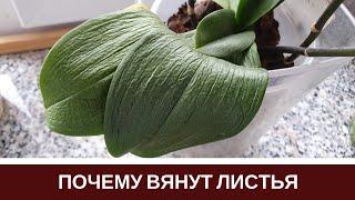 Download 🌸Почему Вянут Листья Орхидеи Пропадет Тургор Листьев Фаленопсиса Video