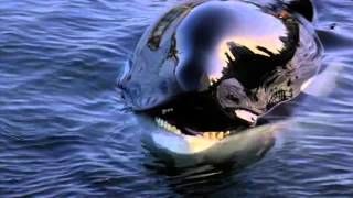 Download Michael Jackson - Will You Be There (Free Willy) Video
