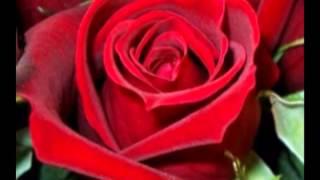 Download กุหลาบแดง 9,999 ดอกเป็นสื่อ มิตรภาพแห่งรัก 9,999 red roses as a fellowship of love . Video