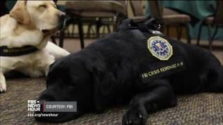 Download Meet the 'courtroom dogs' who help child crime victims tell their stories Video