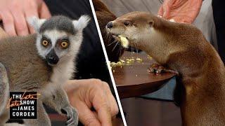 Download Screech Owls & River Otters w/ Jack Hanna, Jeff Goldblum & Marlon Wayans Video