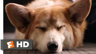 Download A Dog's Purpose (2017) - My Best Life Scene (7/10) | Movieclips Video