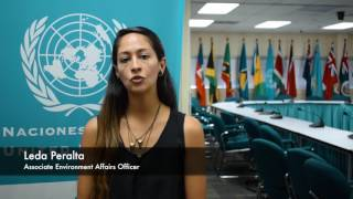 Download Young Professional's Programme Promo, Economic Commission for Latin America and the Caribbean Video