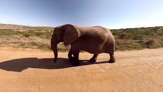 Download 360° Impressionen aus Südafrika | DER Video