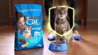 Download Nuevo Purina Cat Chow con Defense Plus Video
