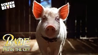 Download ″Babe: Pig in the City″ - Official Trailer Video