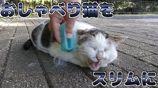Download 【野良猫】おしゃべり猫をスリムに - The talking cat is made slim. - Video