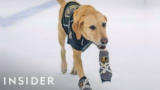 Download How This Rescue Dog Learned To Ice-Skate Video