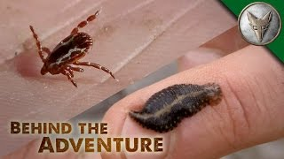 Download YUCK! Avoiding Ticks and Leeches Video