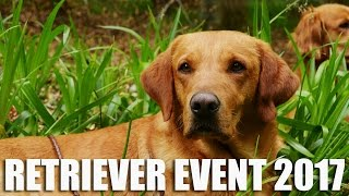 Download Skinners World Cup Retriever Event 2017 Video
