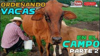 Download Ordeñando las Vacas para sacar la leche en el potrero [YOUTUBERO] | Parte 2 Video