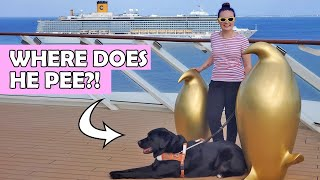 Download I Took My Guide Dog On A Cruise Ship For A Week! Video