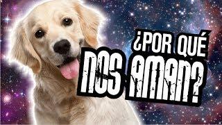 Download ¿Por qué los perros nos quieren tanto? Video