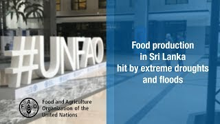 Download Sri Lanka's food production hit by extreme drought followed by floods Video