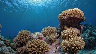Download British Indian Ocean Territory – underwater Video