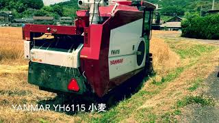 Download YANMAR YH6115 小麦刈取 Video