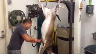 Download Fastest Deer Skinner In The World!!! Video