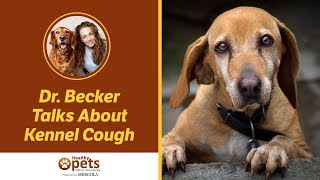 Download Kennel Cough in Dogs Video