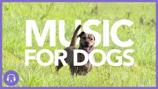 Download Music For Dogs: Instant Relaxation Music (TESTED) Video