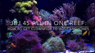 Download How to get Anemones to Host Clownfish Video