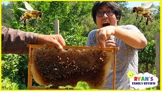 Download First Time Seeing Bees In Real Life with Ryan's Family Review!!! Video