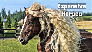 Download 10 Most Expensive Horses Ever Sold In The World Video