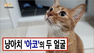 Download 사나운 개냥이가 있다? 고양이 '아코'가 냥아치가 된 이유 Video