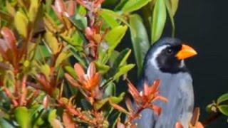 Download Bird feeders Video