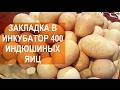Download Птицевод Валентин Сохорев. Закладка в инкубатор MultiLife 400 индюшиных яиц. Video
