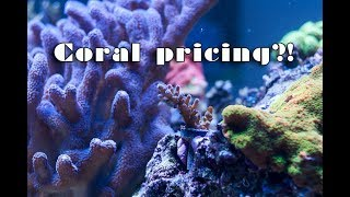 Download Let's talk about coral prices... Video