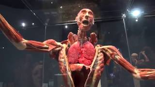 Download Present! - Body Worlds Decoded at the Tech Museum of Innovation Video