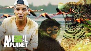 Download La fauna de la mitología maya   Wild Frank en México   Animal Planet Video